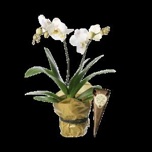 Plantering med vit Phalaenopsis plus en strut choklad.
