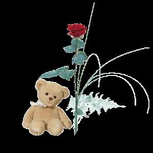 Enkel röd ros tillsammans med en söt nalle.