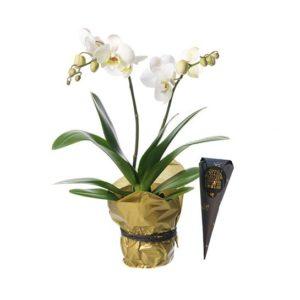 Vit Phalaenopsis-orkidéplantering, inslagen i silkespapper. Plus en strut med chokladpraliner. Finns att beställa som blommogram hos Interflora, en av våra största blomsterförmedlare på nätet.