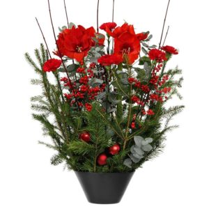 Julgrupp, lyxvariant. Den innehåller bl a amaryllis, ilex, nejlika och tall. Ur Interfloras julsortiment.