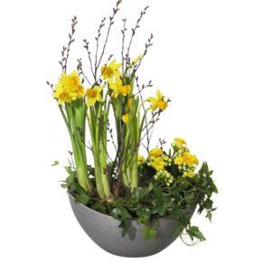 Blommografera din påskhälsning via Interflora! Här, en påskgrupp med tet a tet, söta mini-våreld och murgröna.