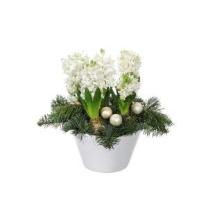 Julgrupp i kruka, med vita hyacinter, tall, gran och julkulor. Blommografera din blomstrande julhälsning via Interflora - beställ din gåva enkelt online!
